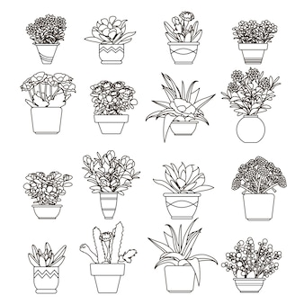 Illustrazione fiori e piante, succulente in vasi in stile linea.