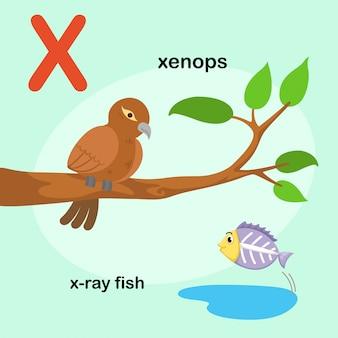 Illustrazione isolata alfabeto animale lettera xx-ray fish, xenops. vettore