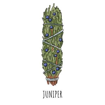Illustrazione isolata di doodle disegnato a mano del bastone di macchia prudente. fagottino alle erbe di ginepro