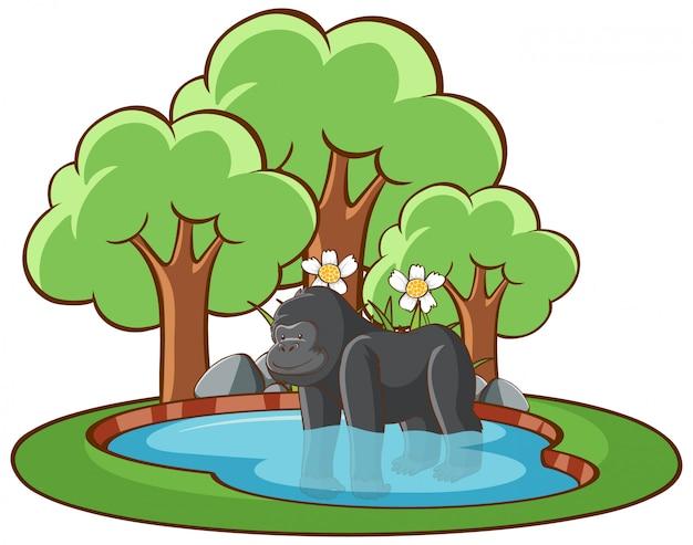 Illustrazione isolata di gorilla nello stagno