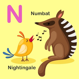 Illustrazione isolato alfabeto animale lettera n-numbat, nightingale