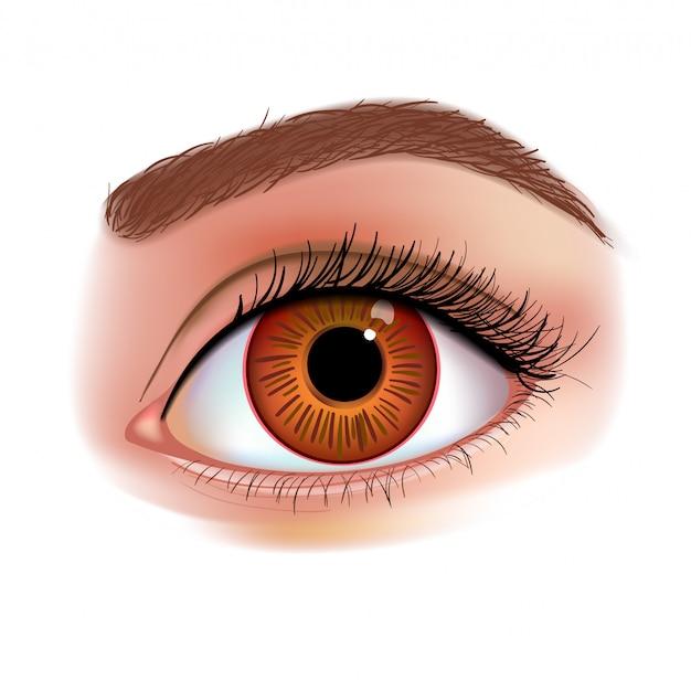 Illustrazione realistica dell'occhio femminile