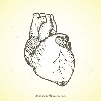 Illustrazione realistica di mano il cuore