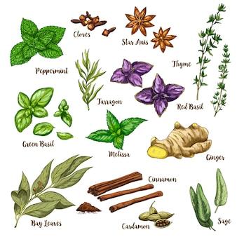 Illustrazione realistica di schizzo di colore pieno delle erbe e delle spezie culinarie