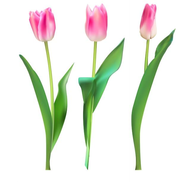 Illustrazione realistica sfondo colorato di tulipani