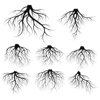 Illustrazione: set di radici degli alberi