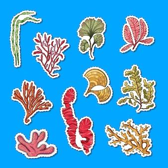 Illustrazione stabilita dell'autoadesivo disegnato a mano degli elementi dell'alga