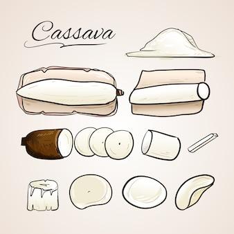 Illustrazione stabilita di vettore disegnato a mano della pianta e del grano di manioca o del grano botanica