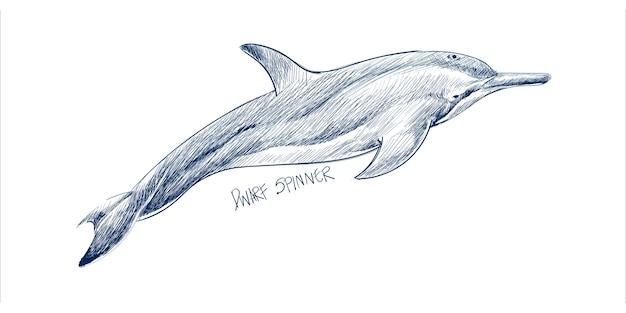 Illustrazione stile di disegno del delfino nano filatore
