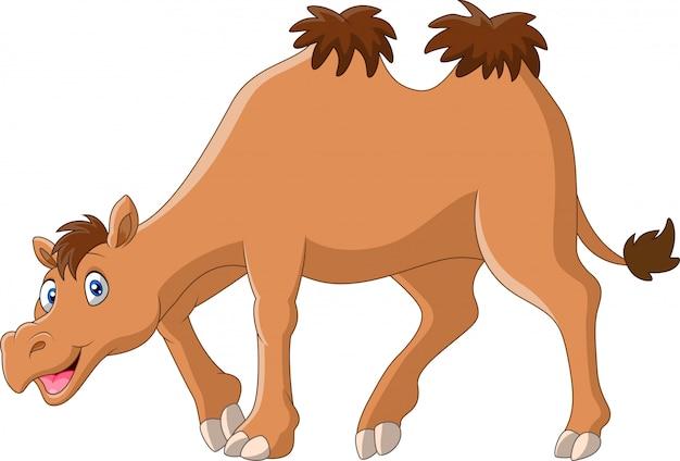 Illustrazione sveglia del fumetto del cammello