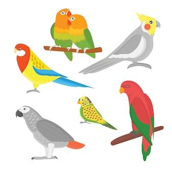Illustrazione tropicale di vettore dell'uccello dell'animale selvatico del pappagallo del fumetto.