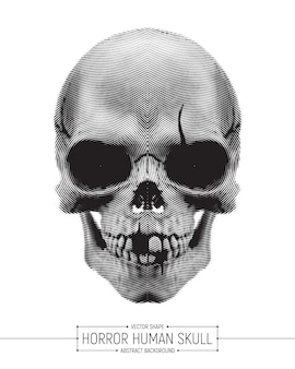 Illustrazione umana di arte del cranio di orrore di vettore isolata