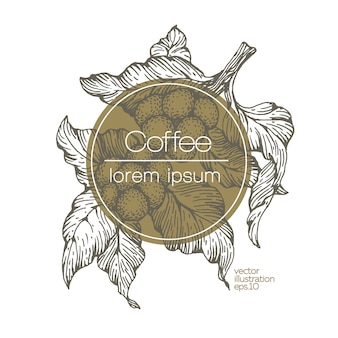 Illustrazione vettoriale di chicchi di caffè.