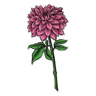 Illustrazione vettoriale di dalia rosa