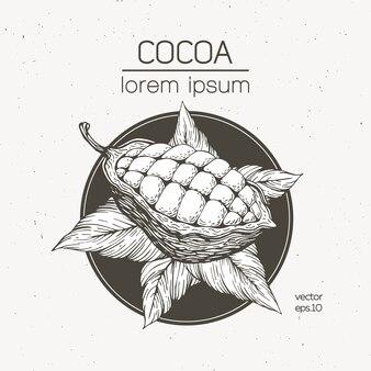 Illustrazione vettoriale di fave di cacao. illustrazione di stile retrò inciso. fave di cacao al cioccolato.