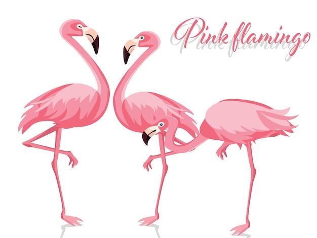 Illustrazione vettoriale di fenicottero rosa
