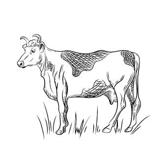 Illustrazione vettoriale di mucca.