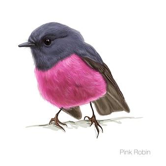 Illustrazione vettoriale disegnata a mano rosa robin