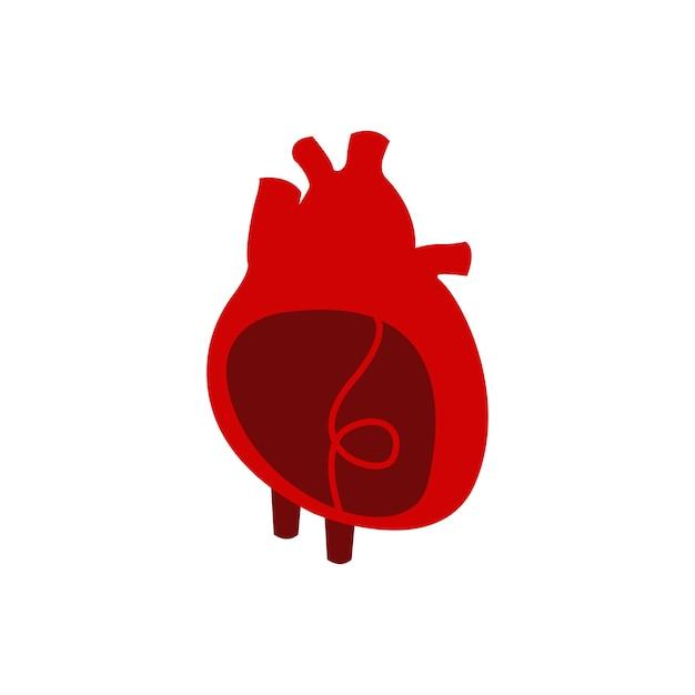 Illustrazione vettoriale isolato di organo cuore