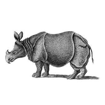 Illustrazioni d'epoca del rinoceronte monoforno