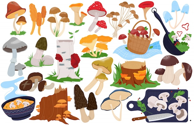 Illustrazioni di funghi, set di cartoni animati con funghi commestibili o velenosi della fattoria forestale, ostrica di boletus fresca, spugnola