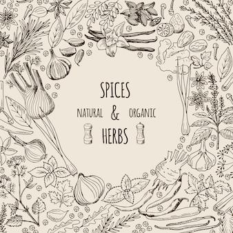Illustrazioni di sfondo sane con spezie ed erbe aromatiche.