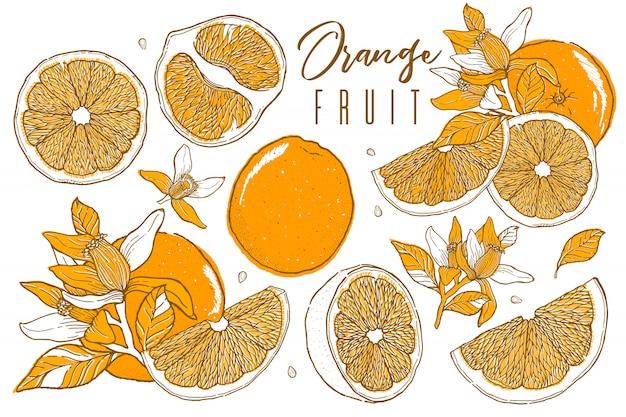 Illustrazioni disegnate a mano di bei frutti arancioni. scetch vintage. disegni di arance mature intere, a metà e affettate, succo, segmento.