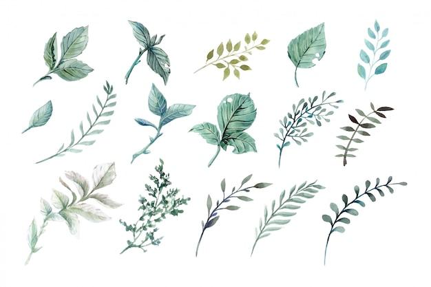 Illustrazioni vettoriali ad acquerello