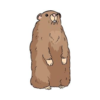 Immagine di cartone animato carino groundhog
