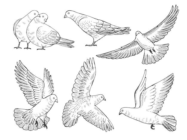 Immagini disegnate a mano di piccioni in diverse pose