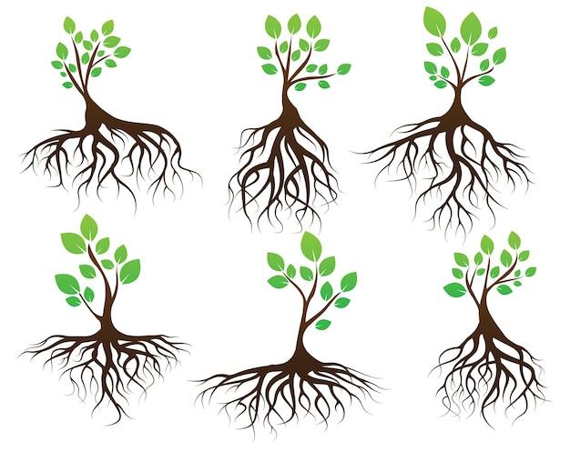 Imposta albero verde e radici