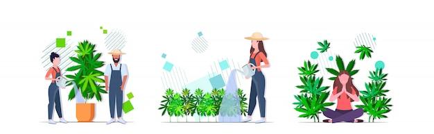 Impostare agricoltori irrigazione ragazza di cannabis godendo dell'effetto narcotico piantagione di canapa industriale coltivazione di marijuana pianta consumo concetti raccolta orizzontale