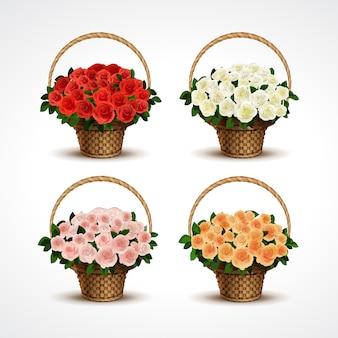 Impostare cestini di rose isolati