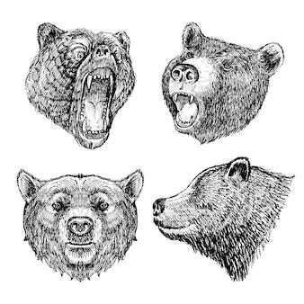 Impostare disegnati a mano della testa dell'orso