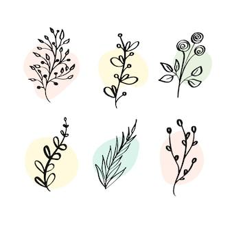 Impostare elementi botanici fiori di campo, erbe