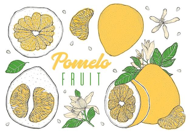 Impostare frutta pomelo disegnati a mano colorata.