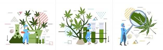 Impostare i ricercatori controllando analizzando esaminando la pianta di marijuana sanità farmacia medico cannabis concetto orizzontale a figura intera