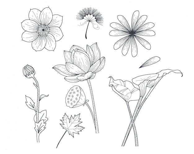Impostare il fiore in stile disegno