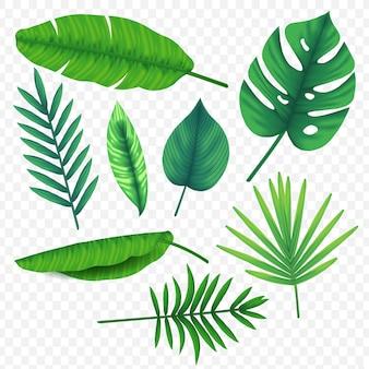Impostare il vettore di foglie tropicali