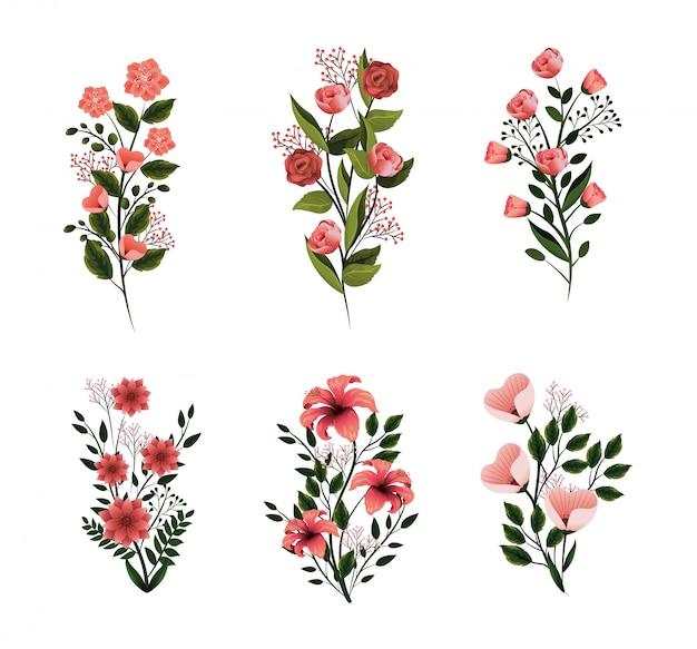 Impostare la natura, fiori, piante con petali e foglie