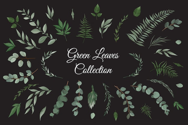Impostare la raccolta di erbe foglie verdi in stile acquerello.