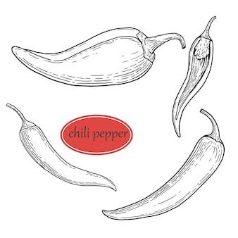 Impostare lo schizzo a mano della cucina di condimenti al peperoncino e delle spezie. oggetto di stile inciso vegetale. pepe messicano piccante caldo isolato