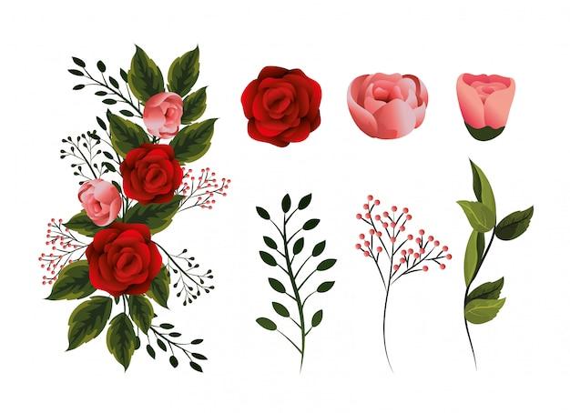 Impostare piante di fiori di bellezza con petali e foglie