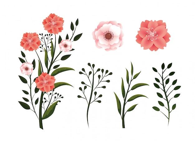 Impostare piante di fiori esotici con petali e foglie