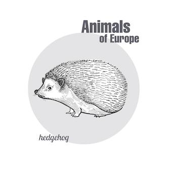 Incisione d'epoca di hedgehog animale.