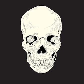 Incisione di disegno del cranio