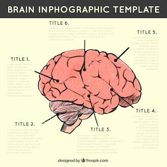 Infografica del cervello umano con diverse opzioni