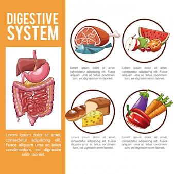 Infografica del sistema digestivo