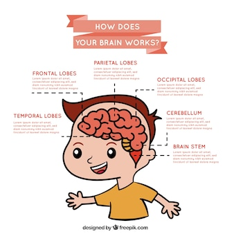 Infografica sul funzionamento del cervello