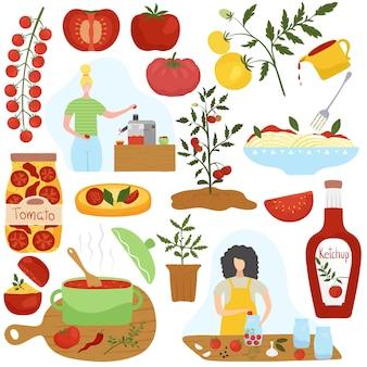 Ingrediente del pomodoro in piatti differenti, illustrazione di cottura domestica
